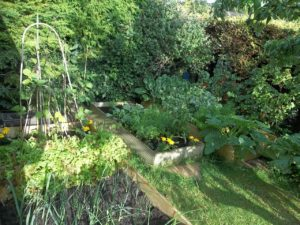 gardening-exercise
